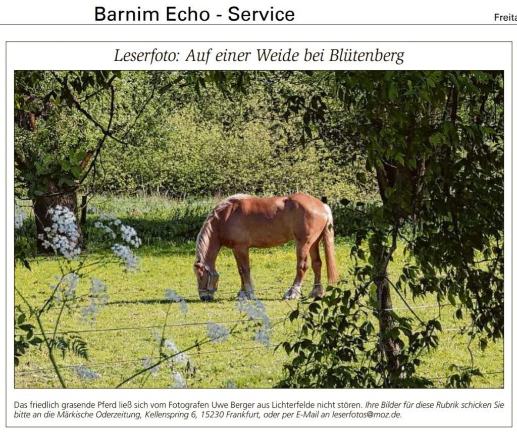 Dieses Bild hat ein leeres alt-Attribut; sein Dateiname ist s.12-barnim-echo-service-freitag-16.-juni-2017.jpg.